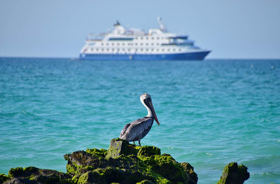Galapagos Cost: Santa Cruz II expedition ship