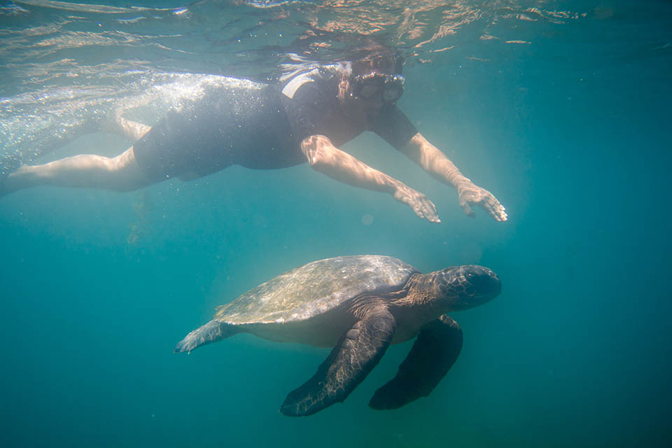 Guest snorkeling with a sea turtle in the Galapagos Islands.