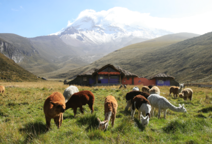 Andes Traditions and Extreme Galapagos