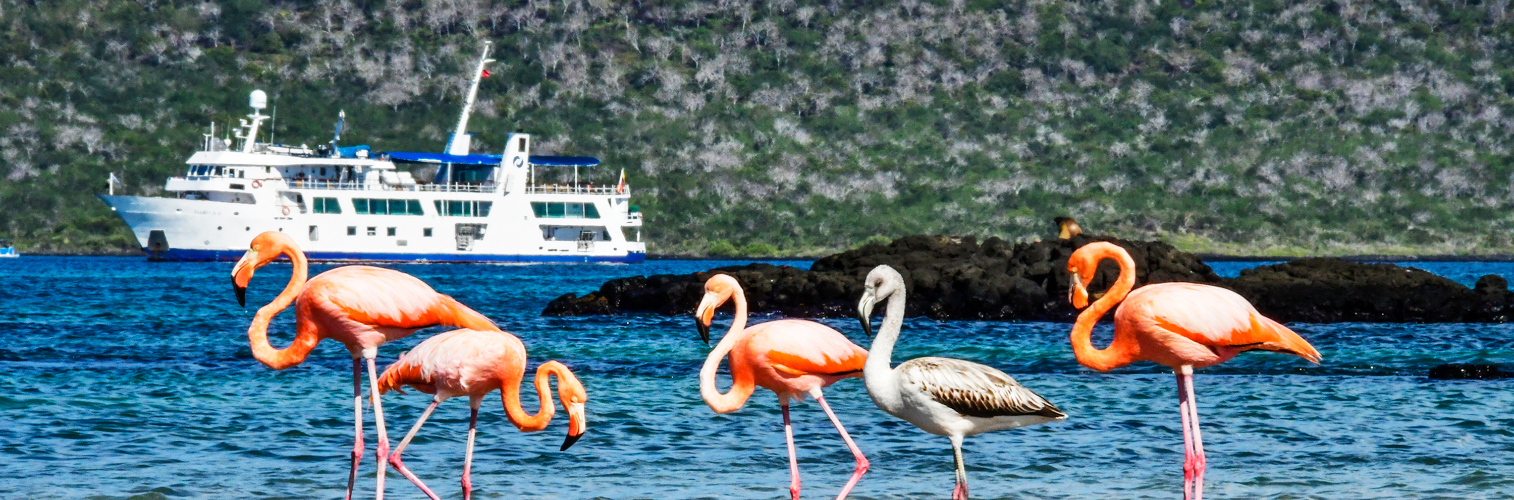 Galapagos Islands aboard Yacht Isabela II - Islands - Wildlife - Activities