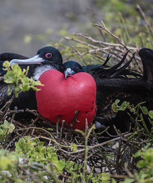 Best time to go to Galapagos: Birdwatching