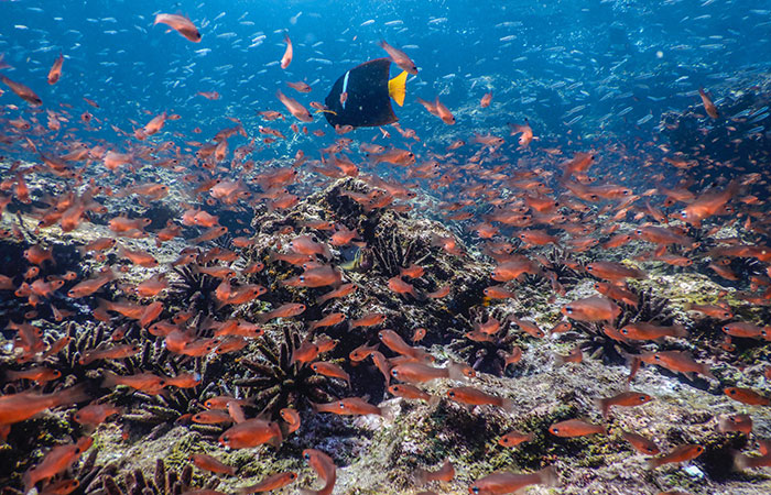 Best time to go to Galapagos: Upwellings