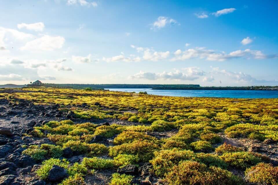 Sunny day Galapagos.