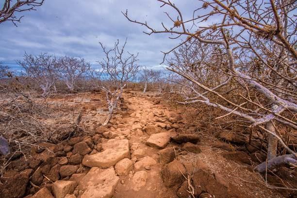 Dry season.