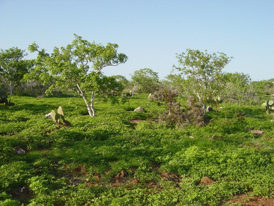 Hot season Galapagos.