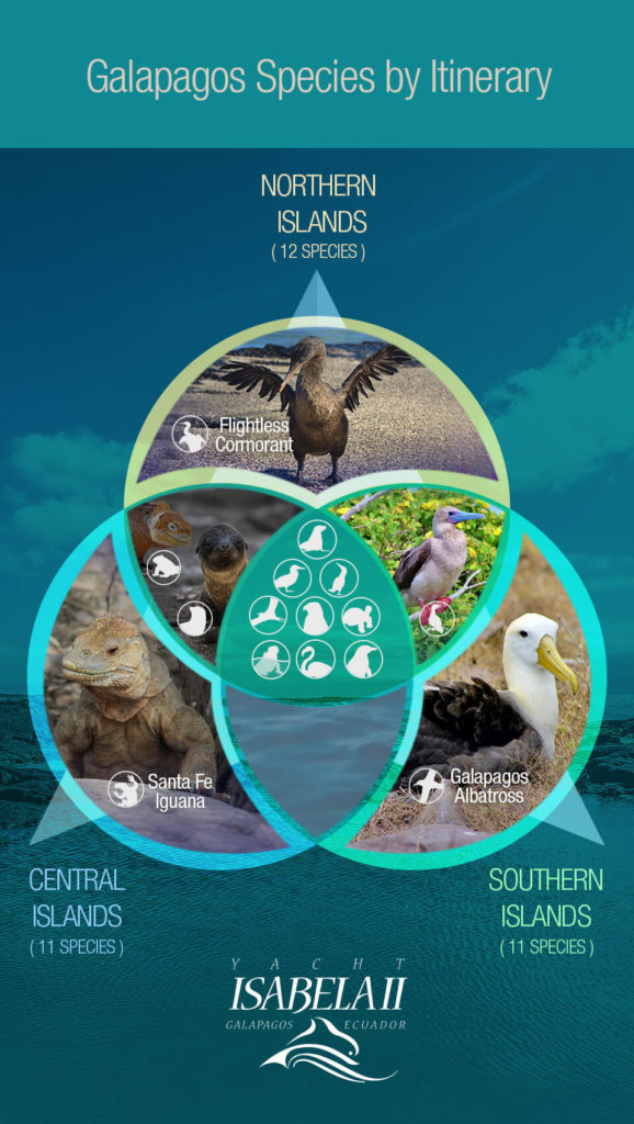 Galapagos iconic species through Isabela´s itineraries.