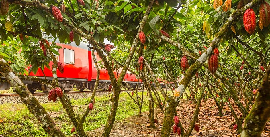Cacao train tour.