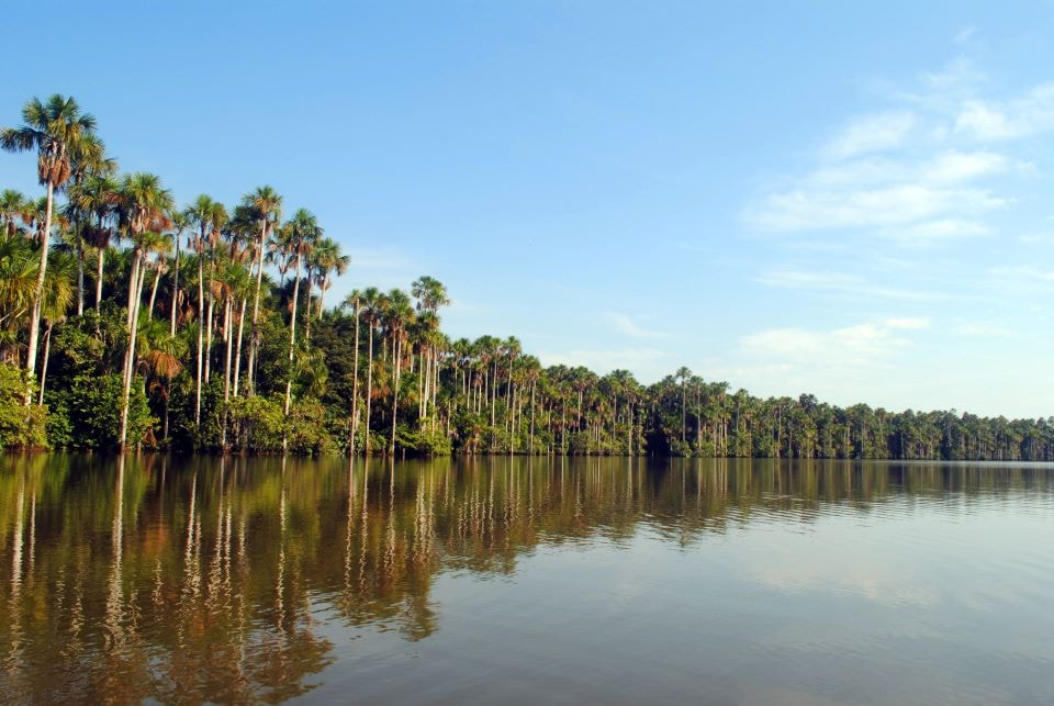 The Amazon Rainforest in Ecuador.