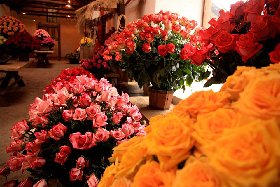 Ecuadorian roses.