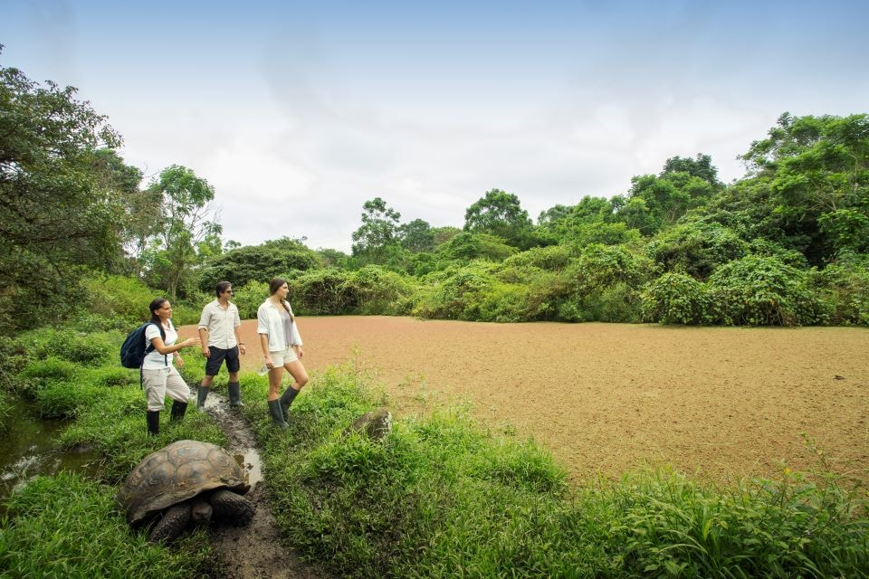 Finch Bay Hotel guests encounter with giant tortoise in the highlands of Santa Cruz.