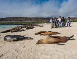 Galapagos sea lions.