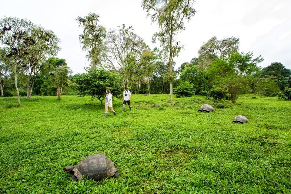 Guests exploring the highlands of Santa Cruz Island and encounter with giant tortoises.