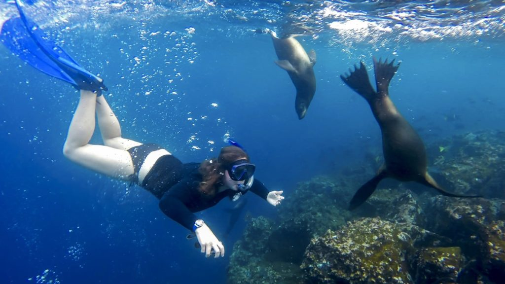 Guest encounter with Galapagos sea lions while Snorkeling in Santa Cruz.