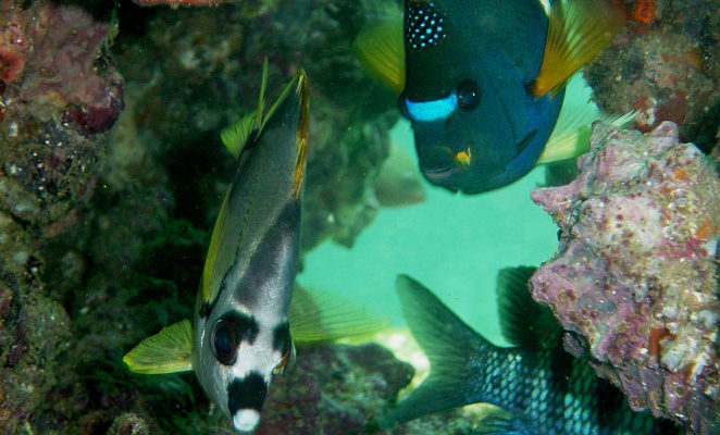 Underwater animals of the Galapagos Islands.