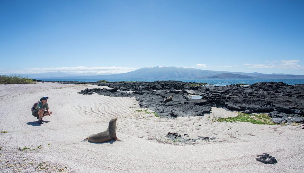 Galapagos sea lion.