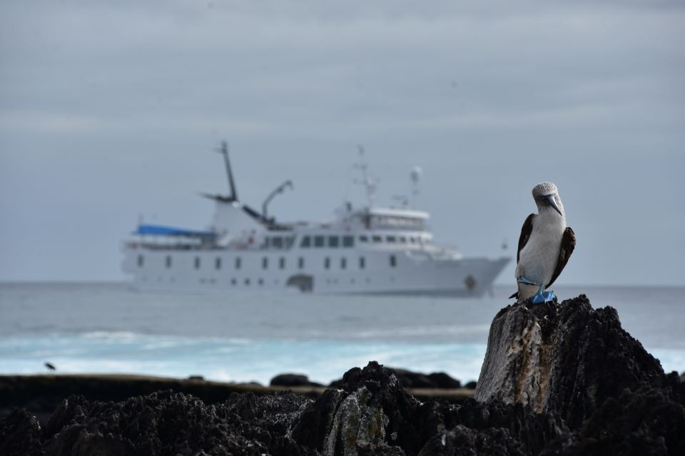 Yacht La Pinta, blue-footed booby in the eastern islands itinerary.