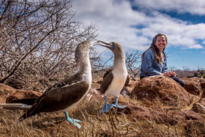 Visitor poes next to pair of courting blue footed boobies