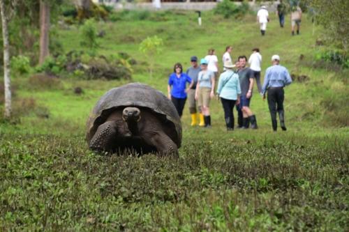 Giant tortoise at Santa Cruz highlands