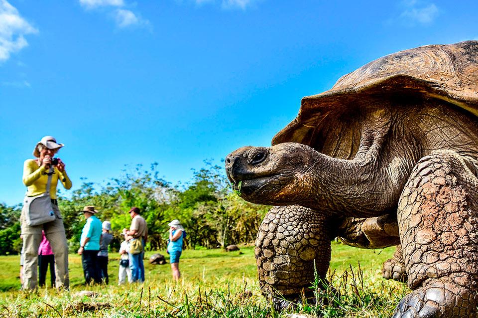 Galapagos Giant Tortoise