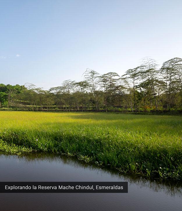 Reserva Mache Chindul.
