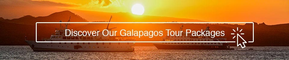 Discover our Galapagos tour package with metropolitan touring