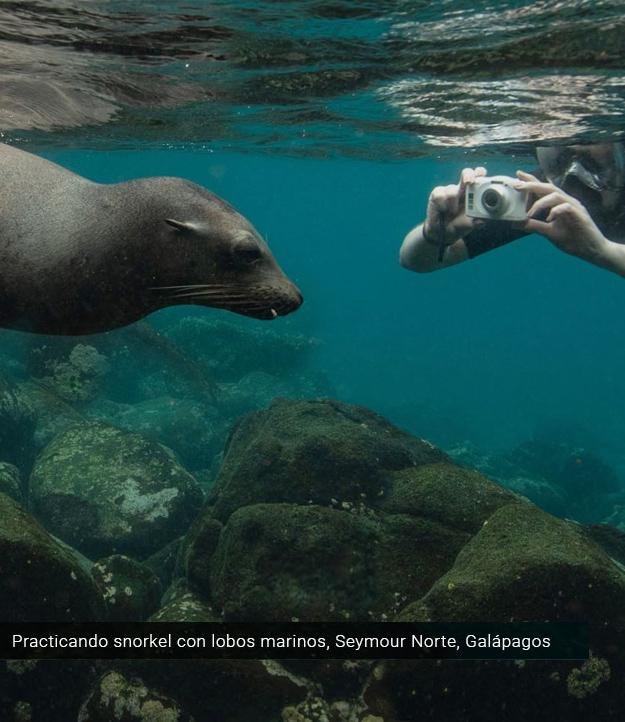 Practicando snorkel con lobos marinos en Galápagos