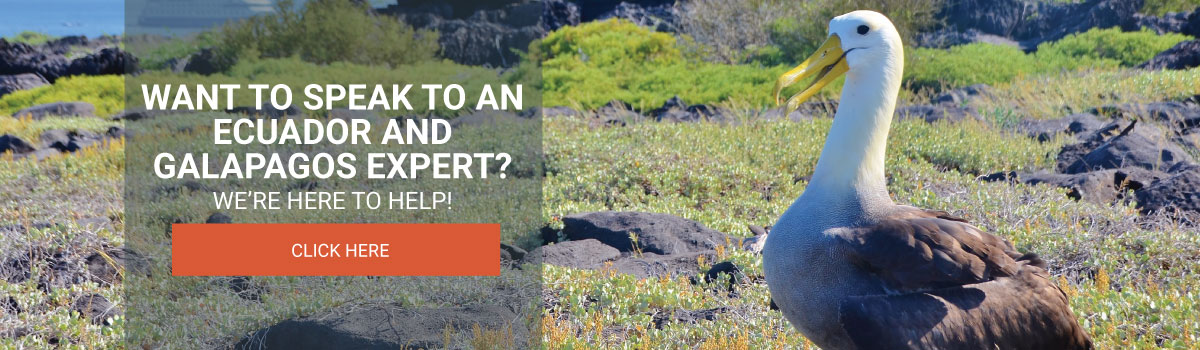 Want to speak to an Ecuador and Galapagos expert?