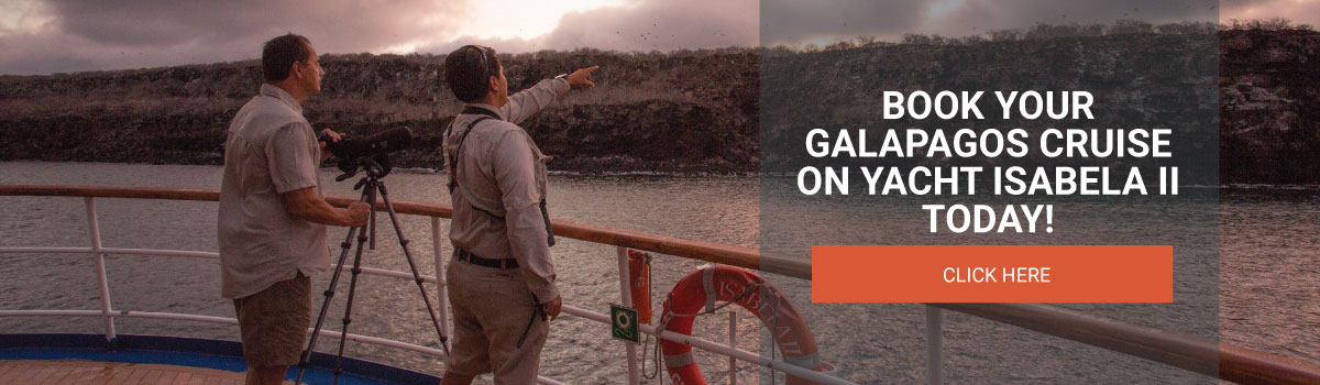 Book your Galapagos Cruise on Yacht Isabla II today!