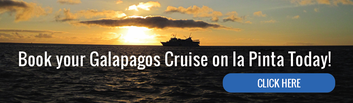 Book your Galapagos Cruise on la Pinta today!